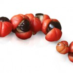 guarana-way-well-and-you-networking