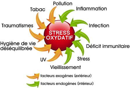 stress-oxydatif-1-pour-internet